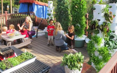 Vertical Gardens: Making Healthy Nutrition a Fun Activity