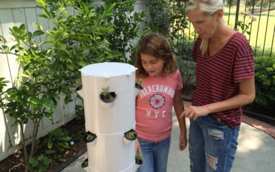 Building a Tower Garden: Set For Growth